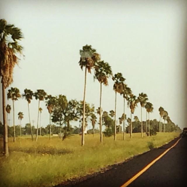 #rgv #palmtrees #hwy77 #willacycounty #texastropicaltrail #greatview