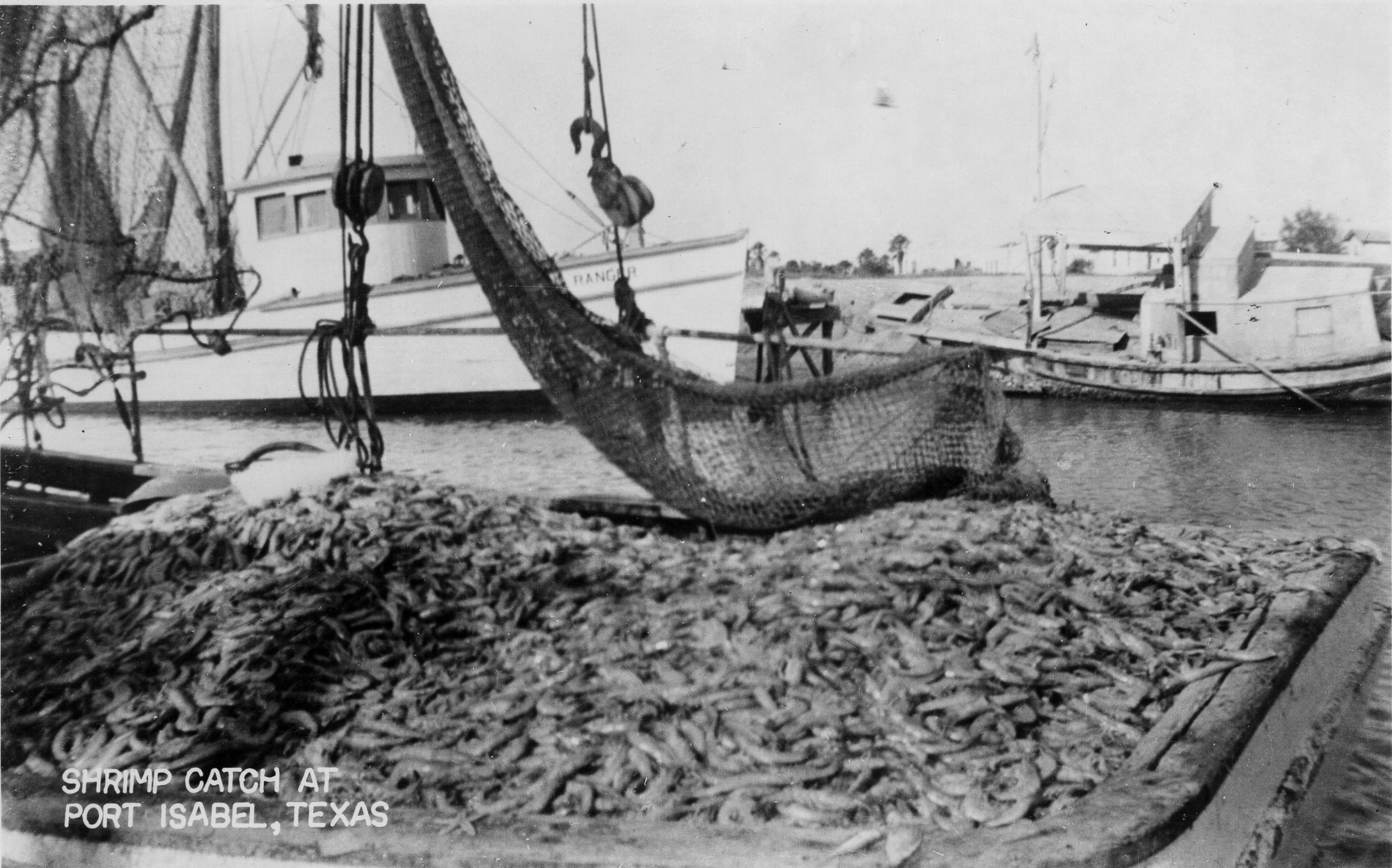 1940s real photo postcard of a Shrimp Catch in Port Isabel, Texas.